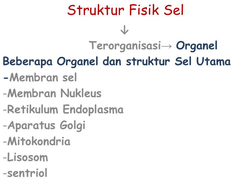 Terorganisasi→ Organel