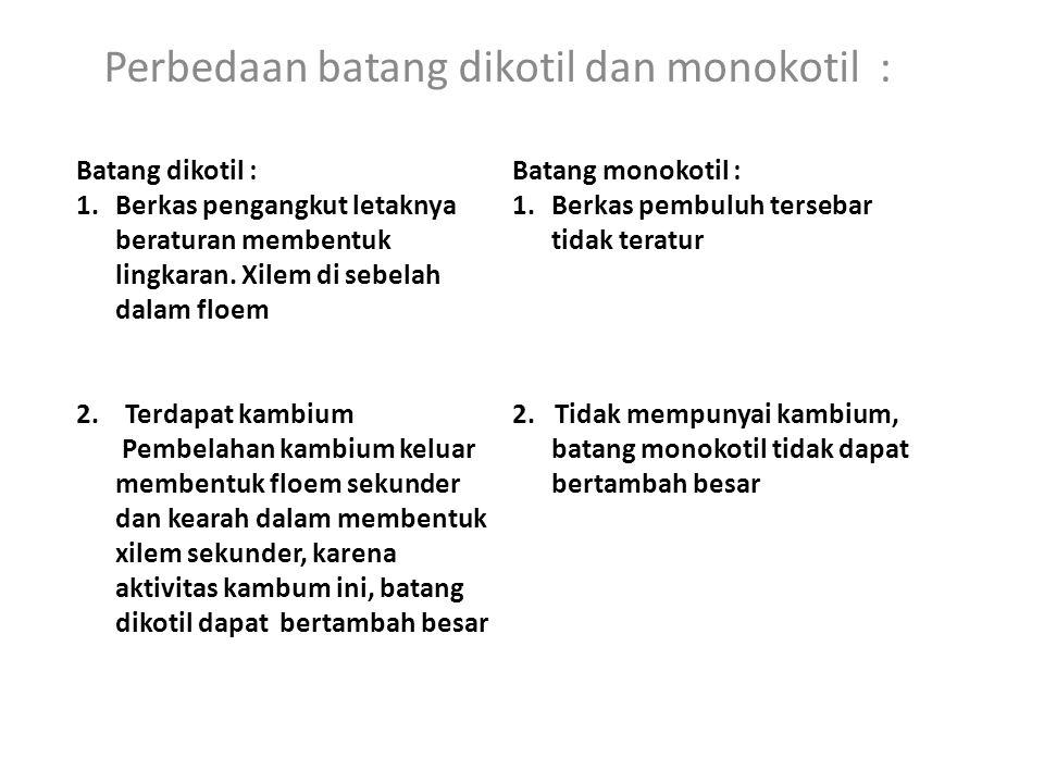 Perbedaan batang dikotil dan monokotil :