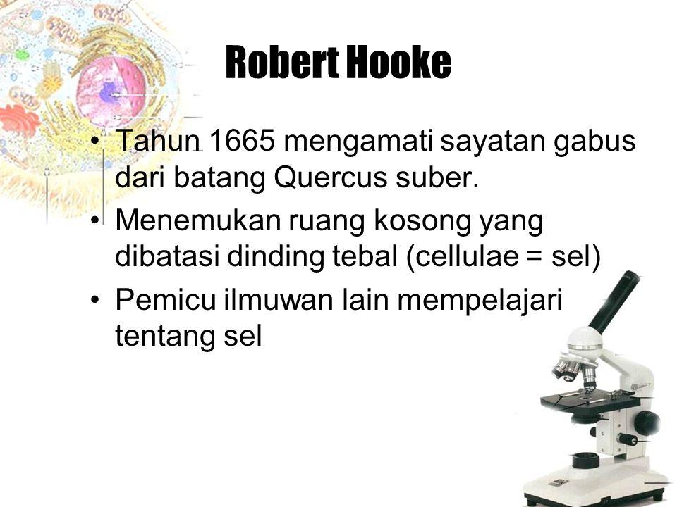 Robert Hooke Tahun 1665 mengamati sayatan gabus dari batang Quercus suber. Menemukan ruang kosong yang dibatasi dinding tebal (cellulae = sel)
