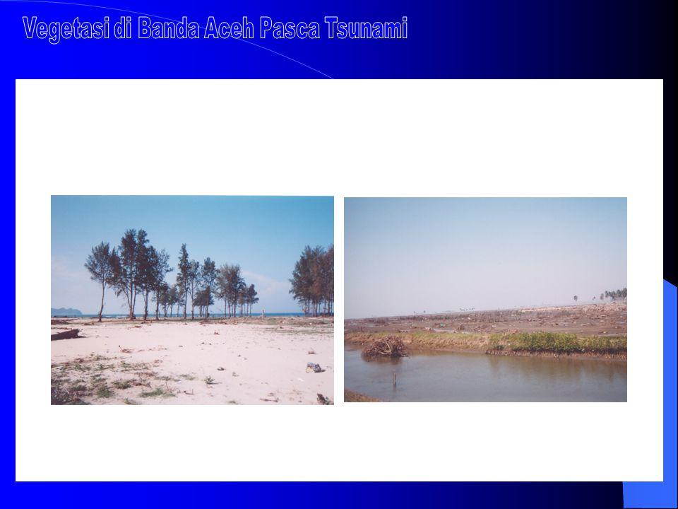 Vegetasi di Banda Aceh Pasca Tsunami