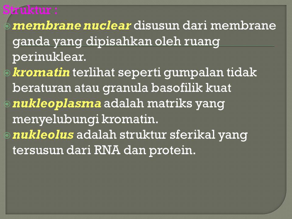 Struktur : membrane nuclear disusun dari membrane ganda yang dipisahkan oleh ruang perinuklear.