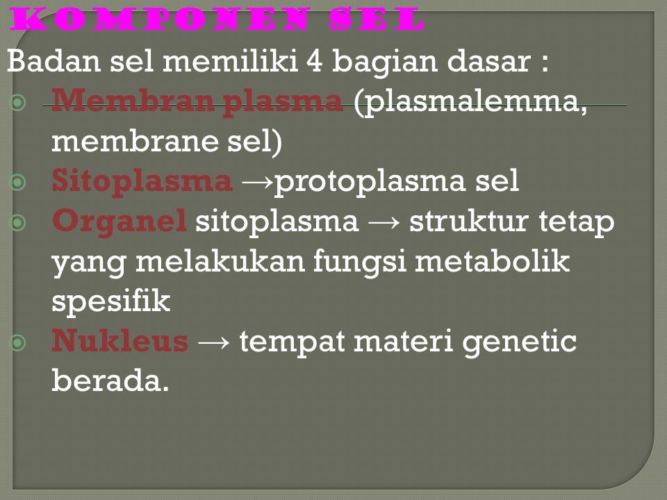 Badan sel memiliki 4 bagian dasar :