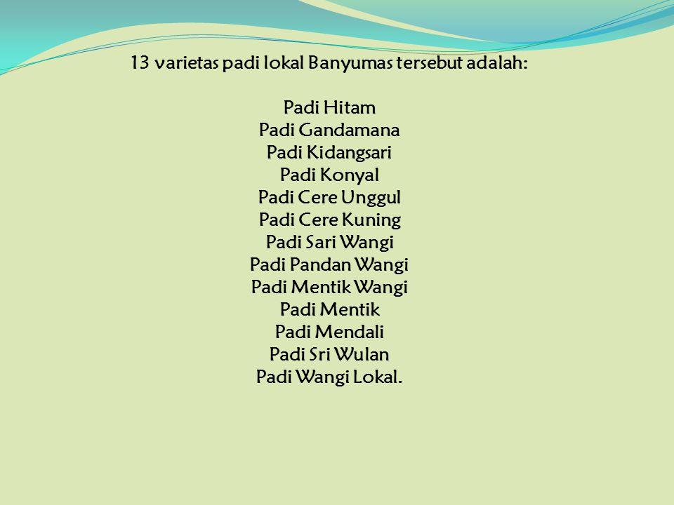 13 varietas padi lokal Banyumas tersebut adalah: