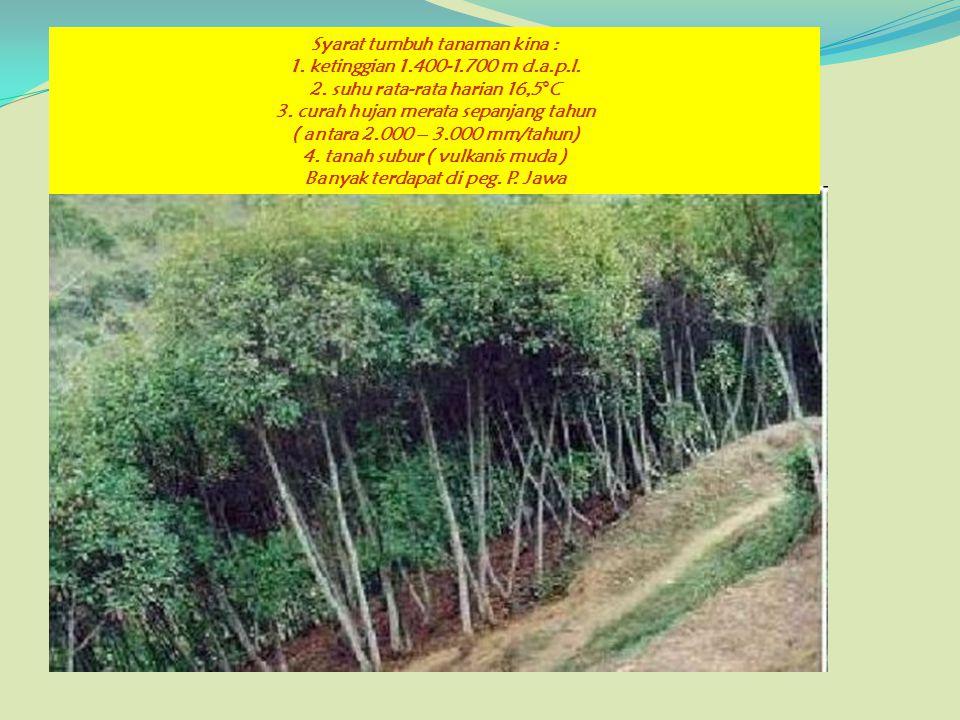 Syarat tumbuh tanaman kina : 1. ketinggian 1. 400-1. 700 m d. a. p. l