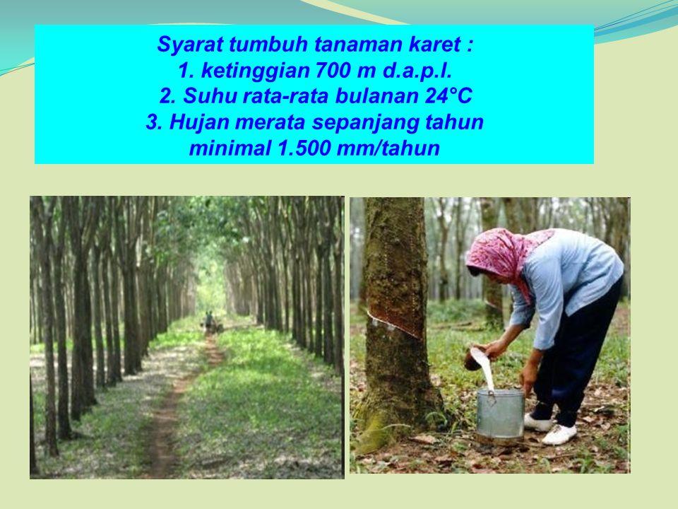 Syarat tumbuh tanaman karet : 1. ketinggian 700 m d. a. p. l. 2