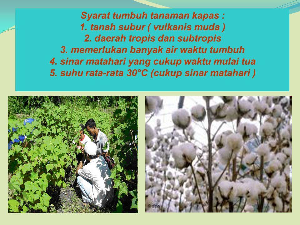 Syarat tumbuh tanaman kapas : 1. tanah subur ( vulkanis muda ) 2