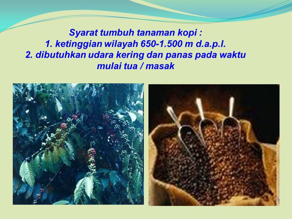 Syarat tumbuh tanaman kopi : 1. ketinggian wilayah 650-1.500 m d.a.p.l.