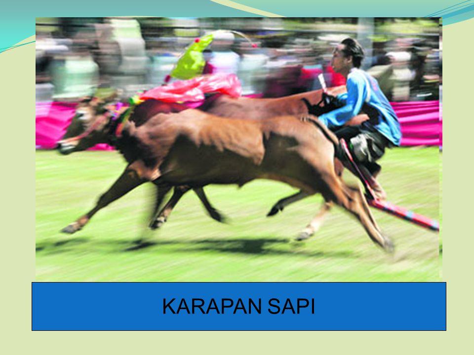 KARAPAN SAPI