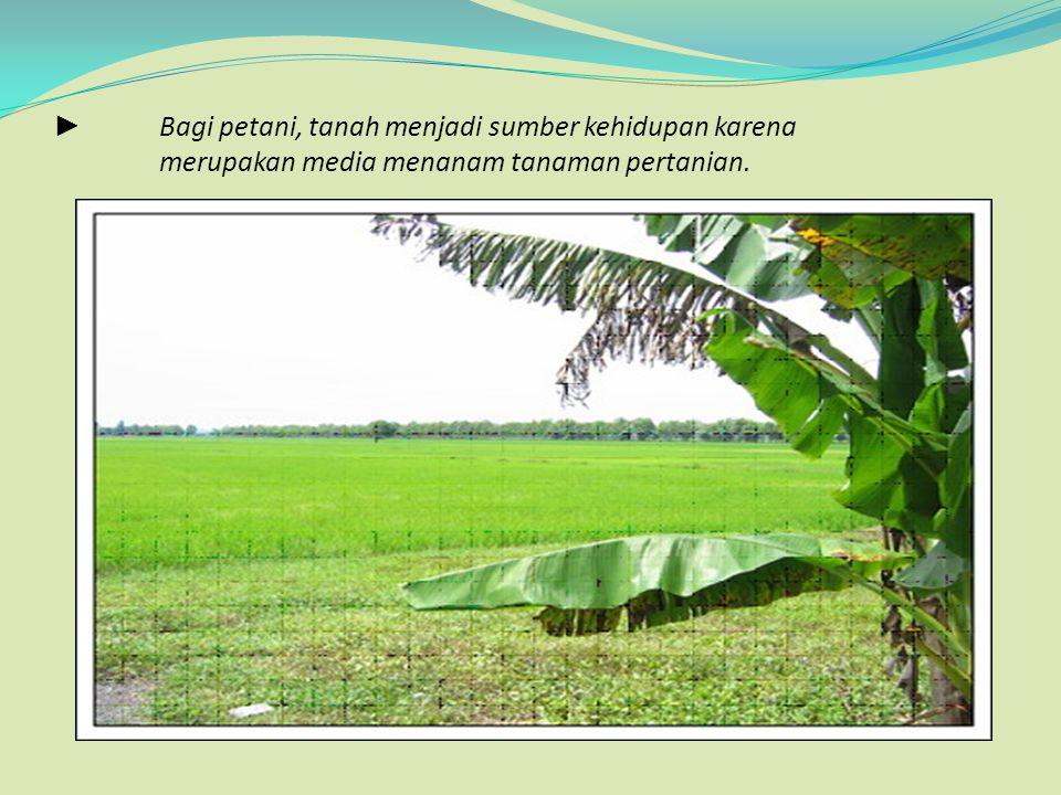 ►. Bagi petani, tanah menjadi sumber kehidupan karena