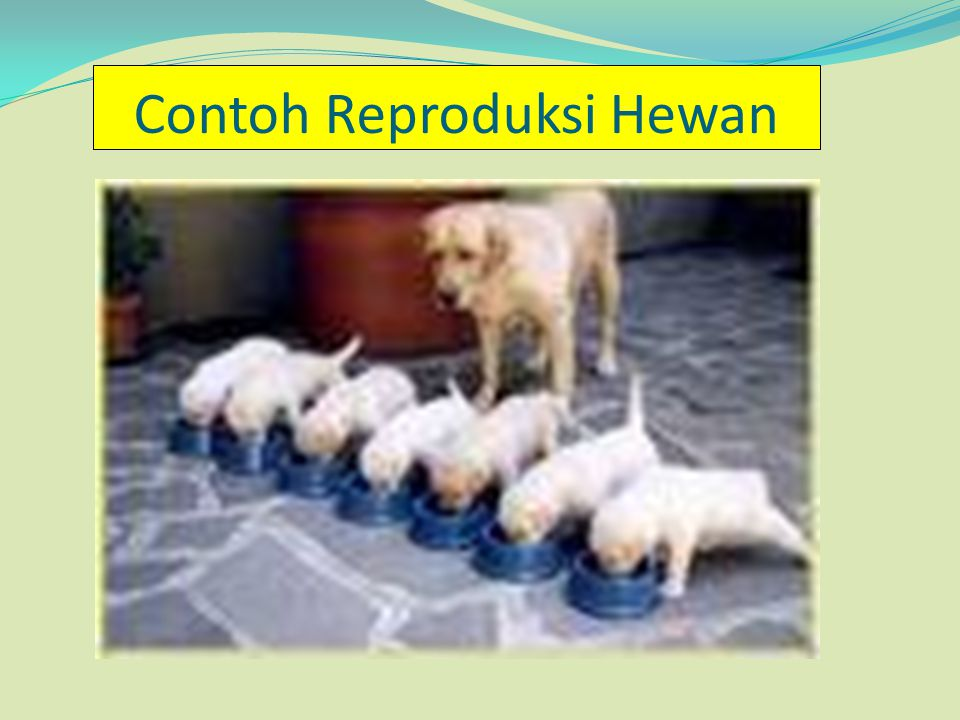 Contoh Reproduksi Hewan
