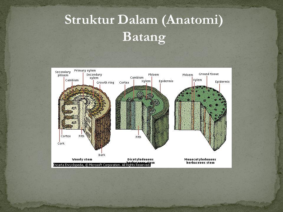 Struktur Dalam (Anatomi) Batang