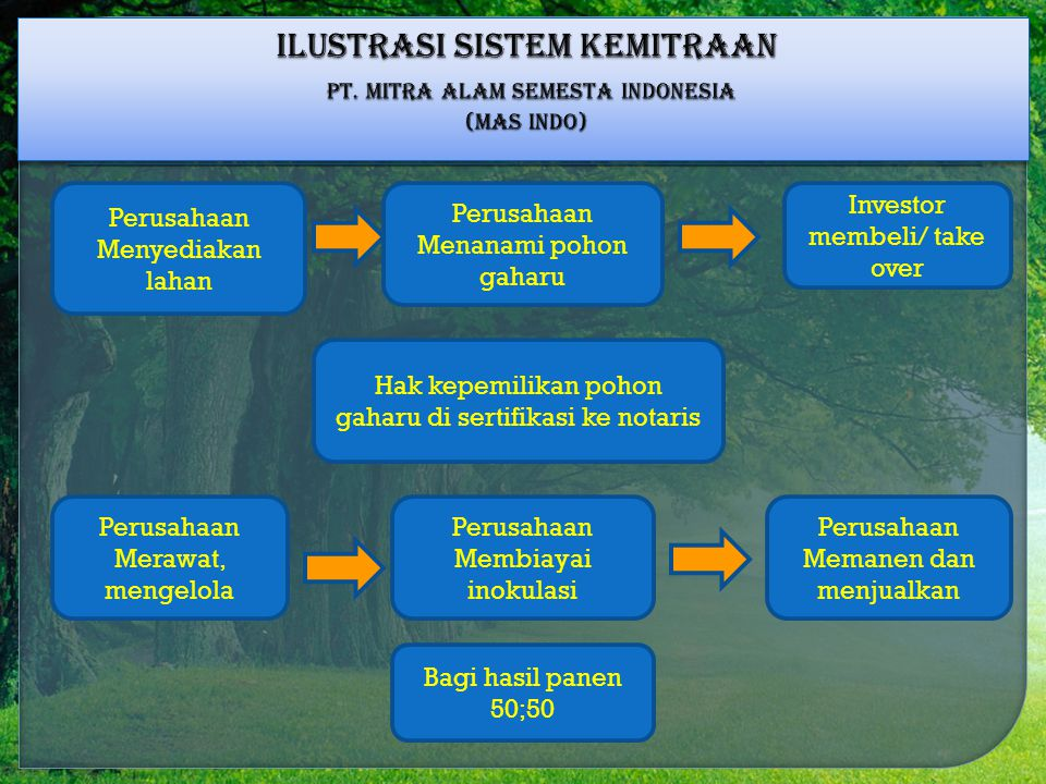 ILUSTRASI SISTEM KEMITRAAN PT. MITRA ALAM SEMESTA INDONESIA (MAS INDO)