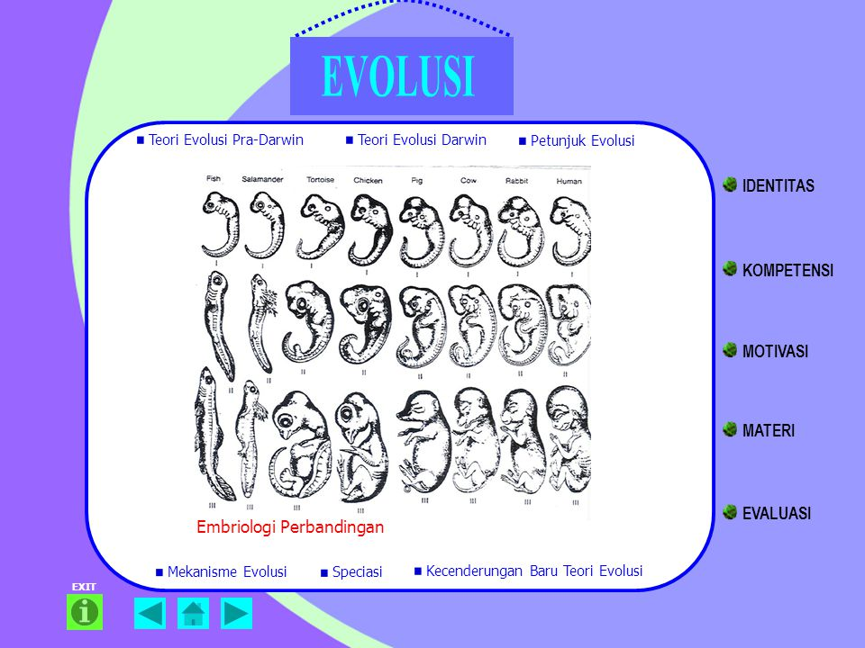 IDENTITAS KOMPETENSI MOTIVASI MATERI EVALUASI Embriologi Perbandingan