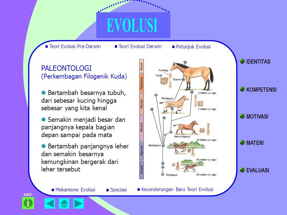 PALEONTOLOGI (Perkembagan Filogenik Kuda)