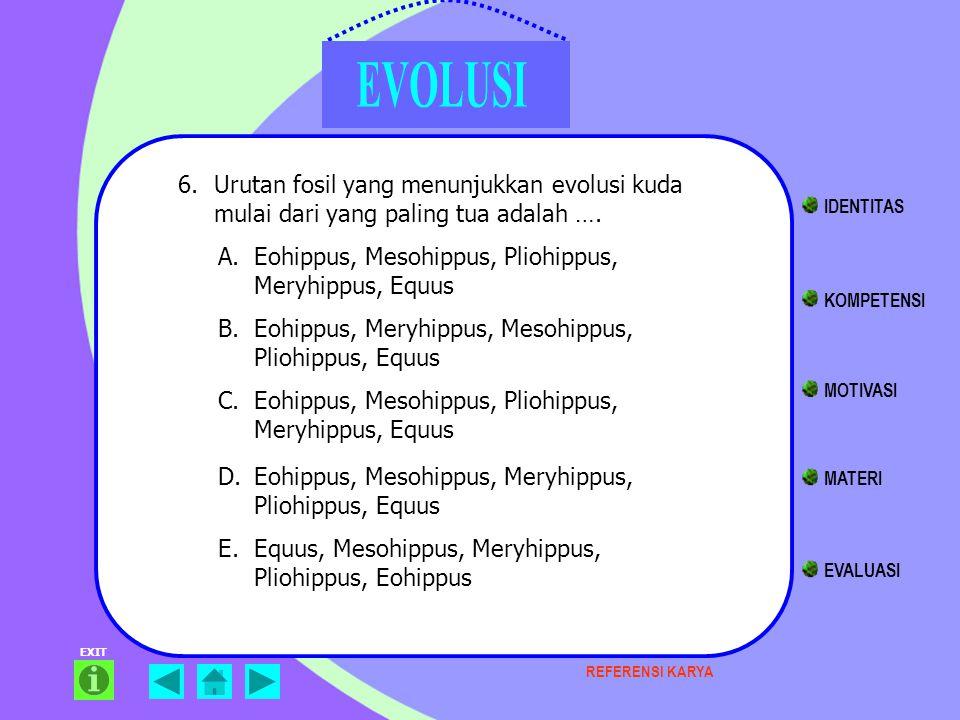Eohippus, Mesohippus, Pliohippus, Meryhippus, Equus