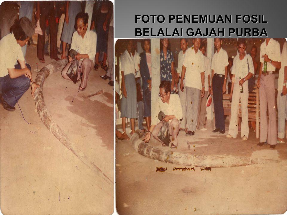 FOTO PENEMUAN FOSIL BELALAI GAJAH PURBA