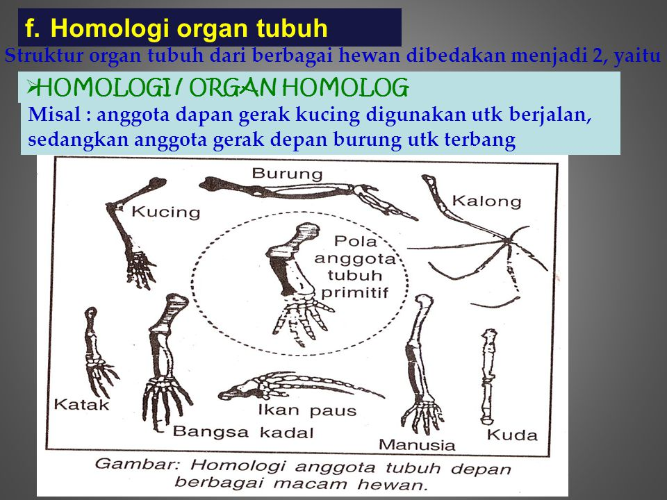 Homologi organ tubuh Struktur organ tubuh dari berbagai hewan dibedakan menjadi 2, yaitu. HOMOLOGI / ORGAN HOMOLOG.