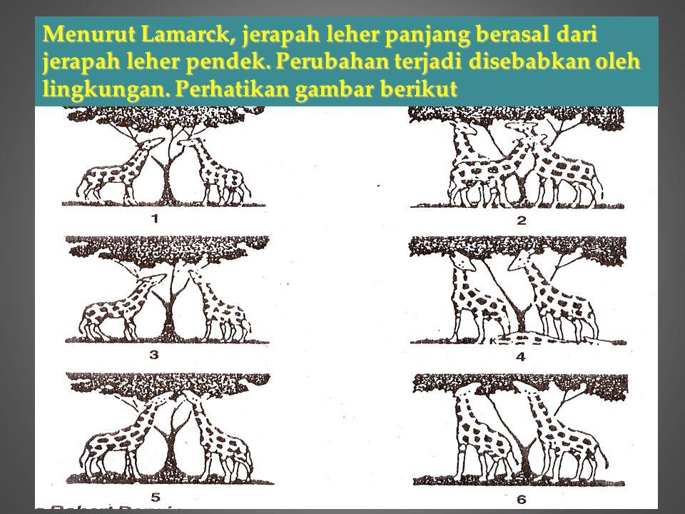 Menurut Lamarck, jerapah leher panjang berasal dari jerapah leher pendek.