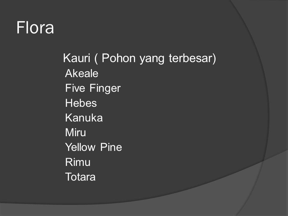 Flora Kauri ( Pohon yang terbesar) Akeale Five Finger Hebes Kanuka
