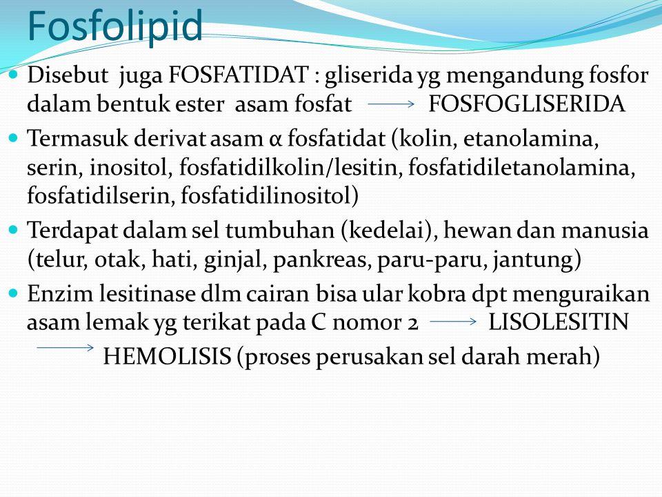 Fosfolipid Disebut juga FOSFATIDAT : gliserida yg mengandung fosfor dalam bentuk ester asam fosfat FOSFOGLISERIDA.