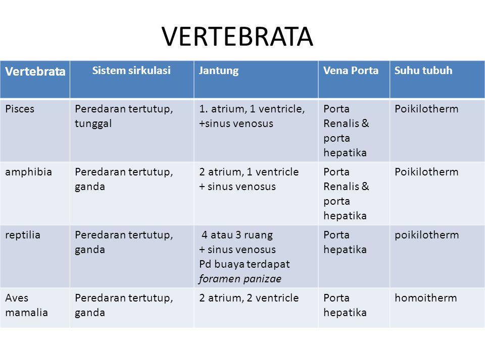 VERTEBRATA Vertebrata Sistem sirkulasi Jantung Vena Porta Suhu tubuh