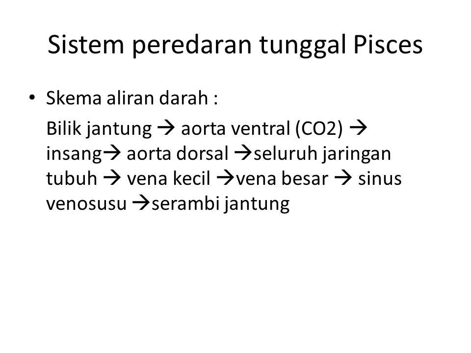 Sistem peredaran tunggal Pisces