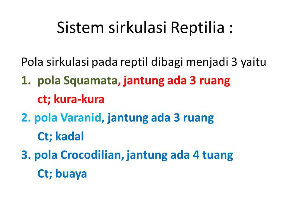 Sistem sirkulasi Reptilia :