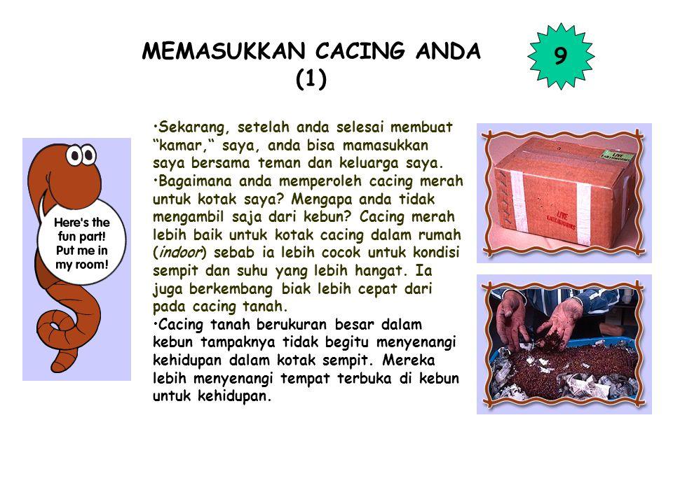 MEMASUKKAN CACING ANDA (1)