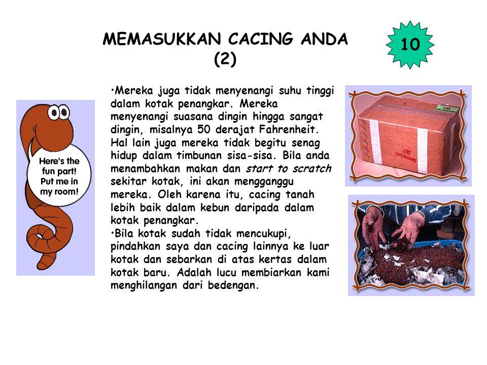 MEMASUKKAN CACING ANDA (2)