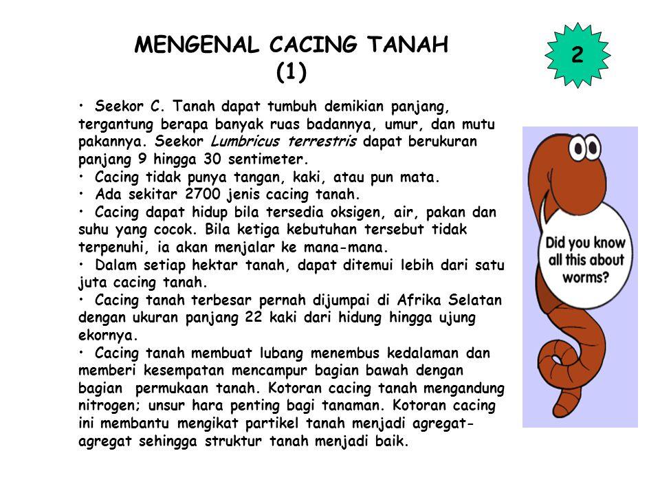 MENGENAL CACING TANAH (1)