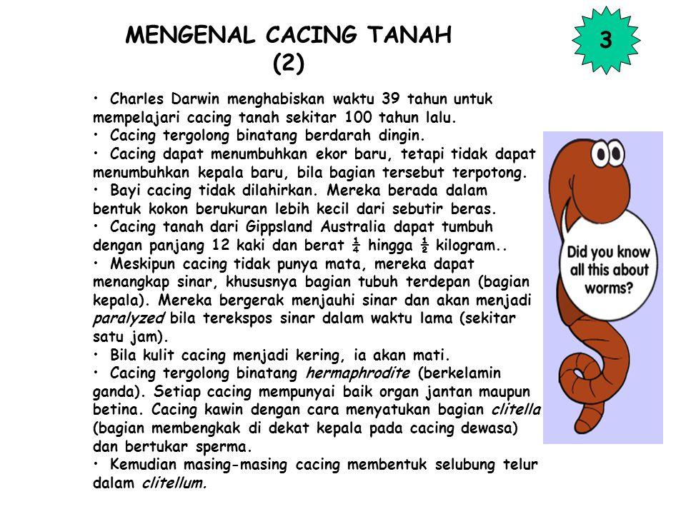 MENGENAL CACING TANAH (2)
