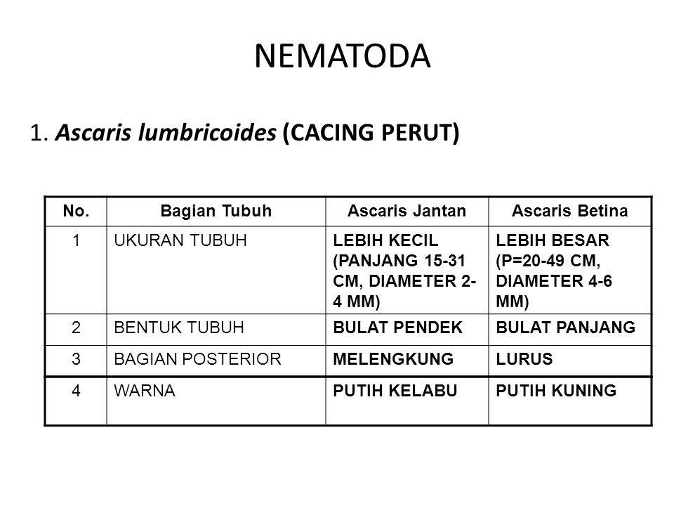 NEMATODA 1. Ascaris lumbricoides (CACING PERUT) No. Bagian Tubuh