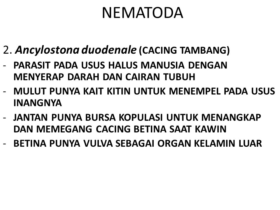 NEMATODA 2. Ancylostona duodenale (CACING TAMBANG)