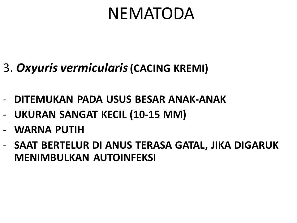 NEMATODA 3. Oxyuris vermicularis (CACING KREMI)