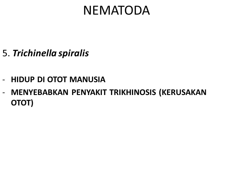 NEMATODA 5. Trichinella spiralis HIDUP DI OTOT MANUSIA