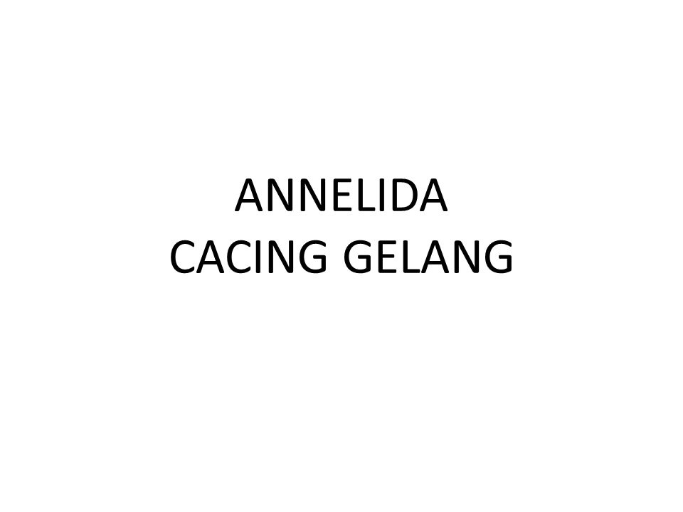 ANNELIDA CACING GELANG