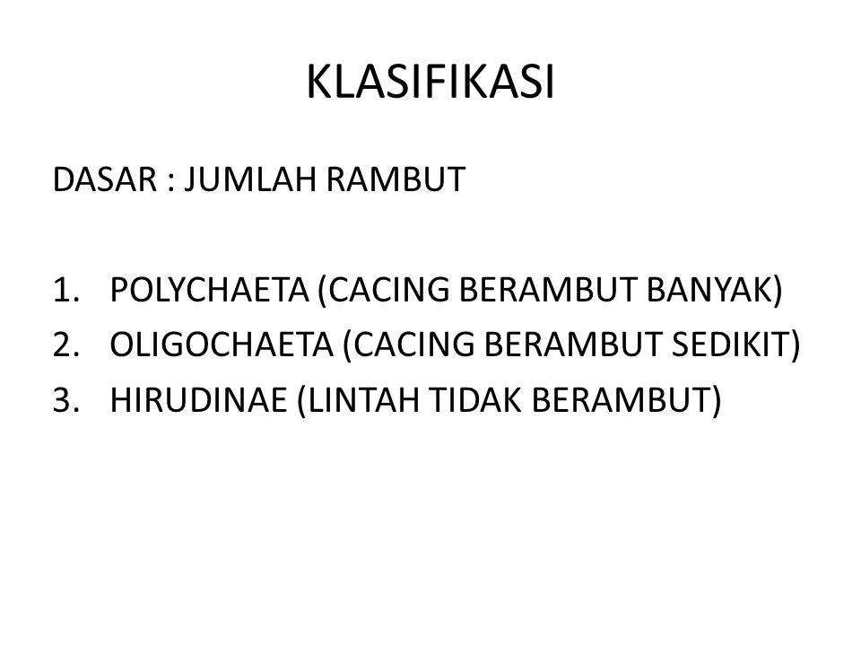 KLASIFIKASI DASAR : JUMLAH RAMBUT POLYCHAETA (CACING BERAMBUT BANYAK)