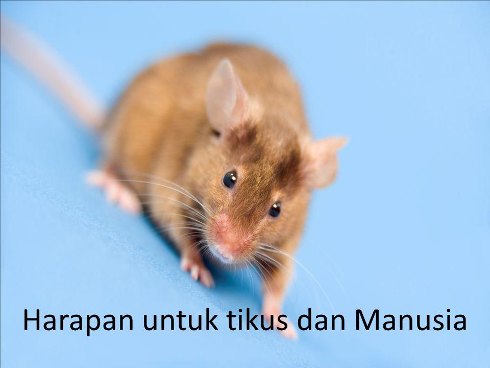 Harapan untuk tikus dan Manusia