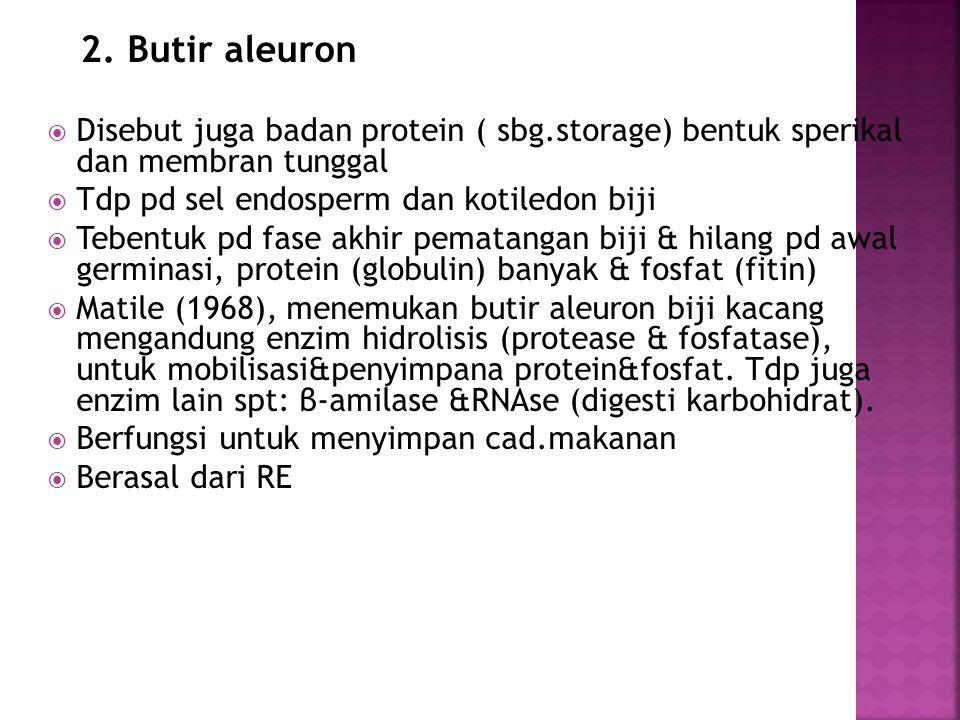 2. Butir aleuron Disebut juga badan protein ( sbg.storage) bentuk sperikal dan membran tunggal. Tdp pd sel endosperm dan kotiledon biji.