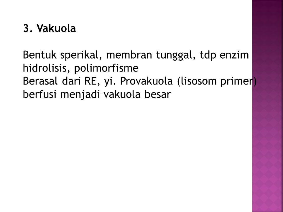 3. Vakuola Bentuk sperikal, membran tunggal, tdp enzim hidrolisis, polimorfisme.