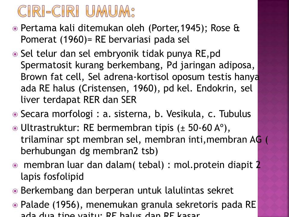 CIRI-CIRI UMUM: Pertama kali ditemukan oleh (Porter,1945); Rose & Pomerat (1960)= RE bervariasi pada sel.