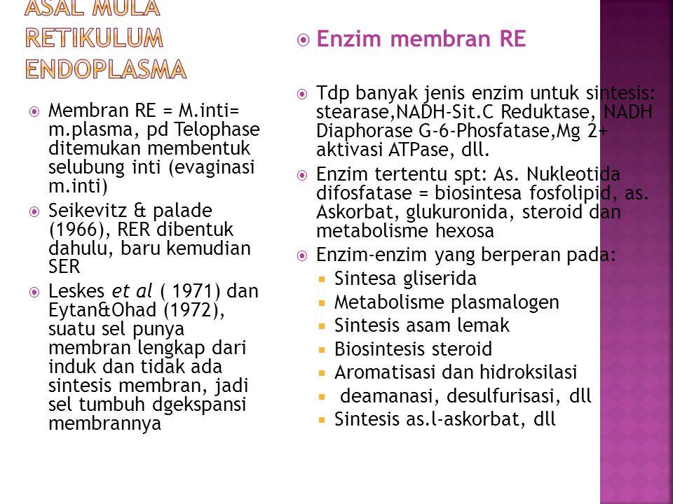 Asal mula Retikulum Endoplasma