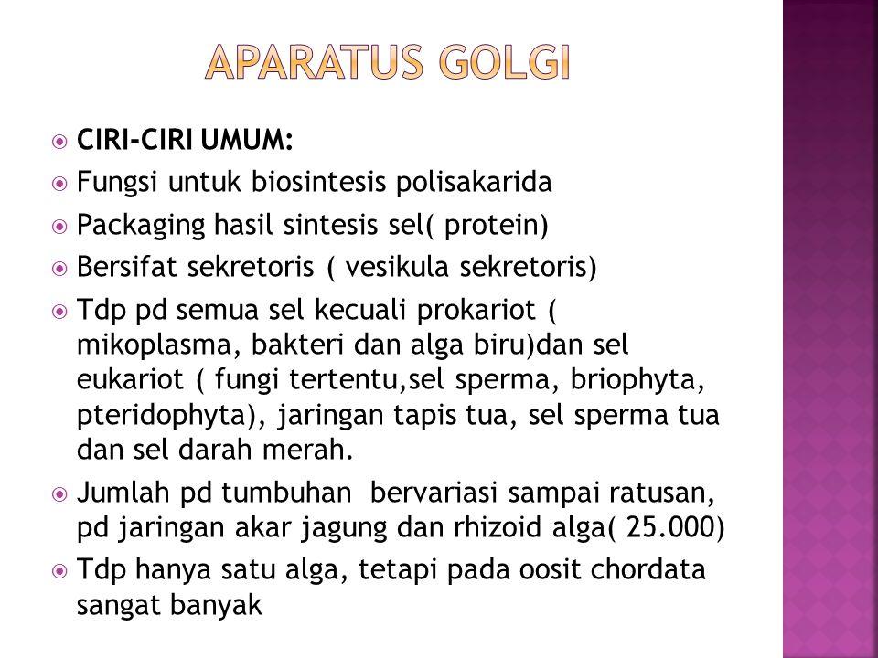 APARATUS GOLGI CIRI-CIRI UMUM: Fungsi untuk biosintesis polisakarida