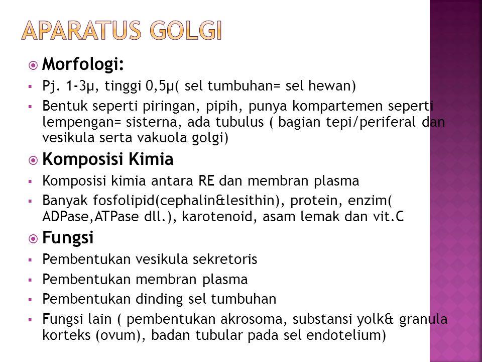 Aparatus golgi Morfologi: Komposisi Kimia Fungsi
