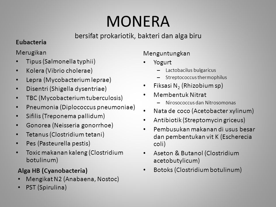 MONERA bersifat prokariotik, bakteri dan alga biru