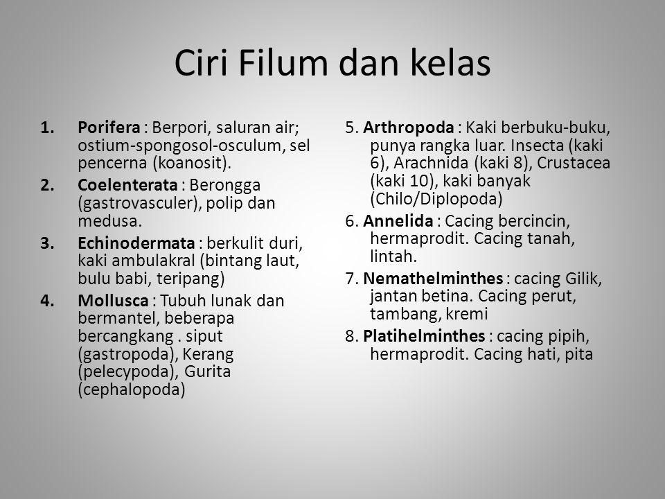 Ciri Filum dan kelas Porifera : Berpori, saluran air; ostium-spongosol-osculum, sel pencerna (koanosit).