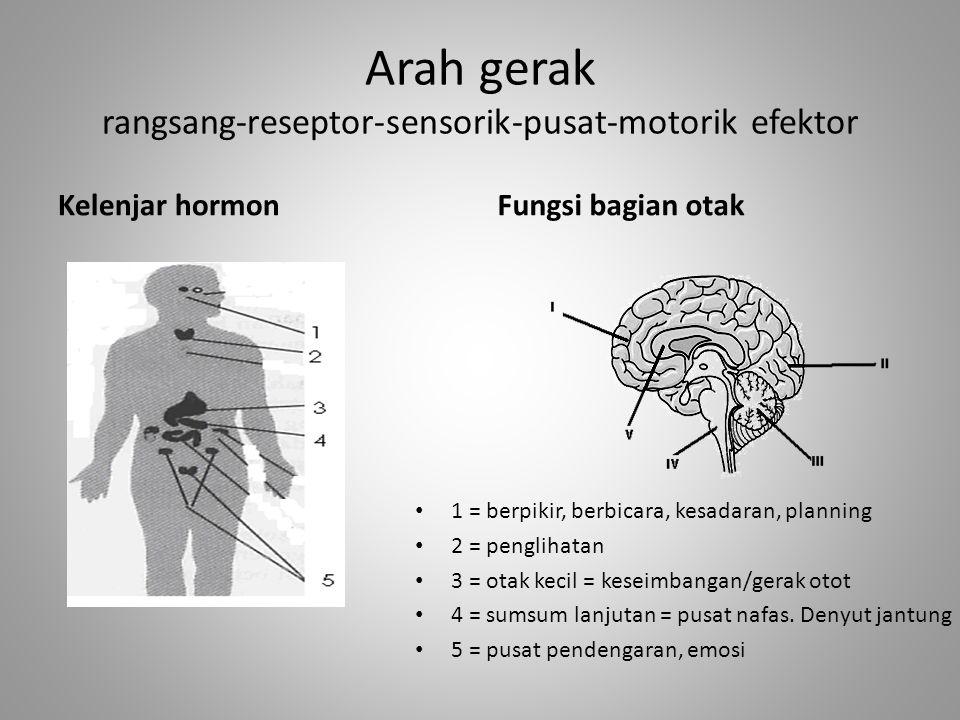 Arah gerak rangsang-reseptor-sensorik-pusat-motorik efektor