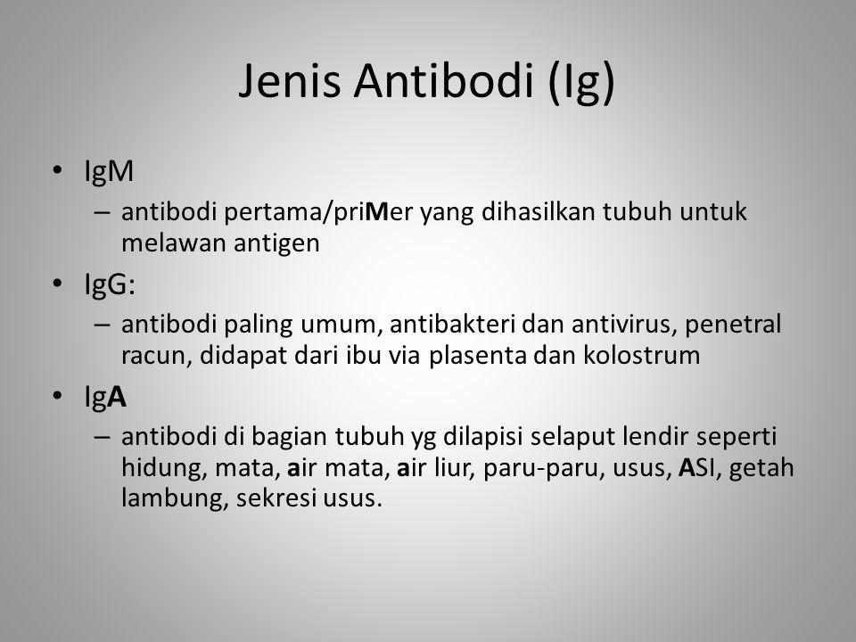 Jenis Antibodi (Ig) IgM IgG: IgA