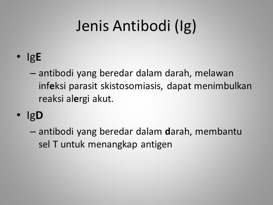 Jenis Antibodi (Ig) IgE IgD