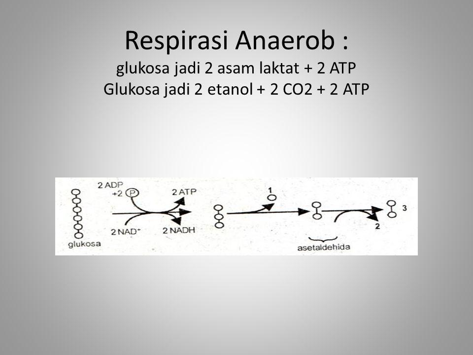 Respirasi Anaerob : glukosa jadi 2 asam laktat + 2 ATP Glukosa jadi 2 etanol + 2 CO2 + 2 ATP